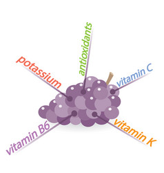 Grapes content properties and benefits vector
