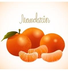 Ripe mandarin vector