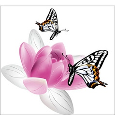 Butterflies and lotus on white background vector