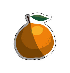 citric orange fruit vector image