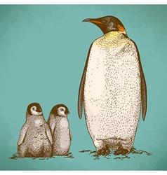 Engraving penguins retro vector