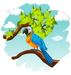 Parrot standing on branch vector image