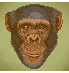 Engraving chimp retro vector