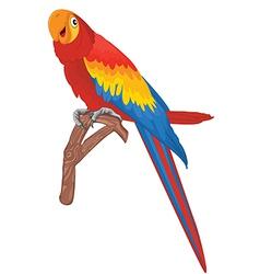 Red parrot bird vector image