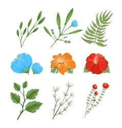 Set of traditional and tropical flowers vector