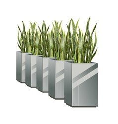 Row of pots with green plant sansevieria vector