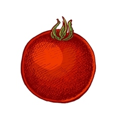 Hand drawn sketchy style colorful tomato vector