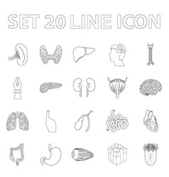 human organs outline icons in set collection for vector image vector image
