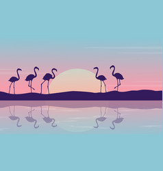 At sunrise flamingo on the riverbank landscape vector