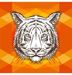 With tiger head hand drawn vector