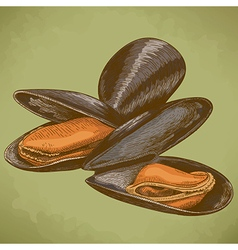 Engraving mussel retro vector
