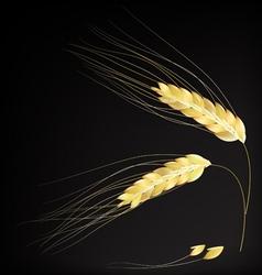 Ears of barley vector