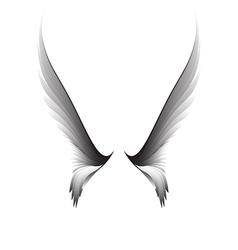 Gray pair wings vector image vector image