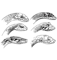 Sketch of snakes vector image
