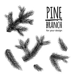 set from fir tree branches template for business vector image