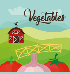 vegetables fresh farm harvest product diet vector image