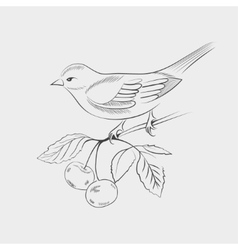 Hand drawn bird on a branch vector