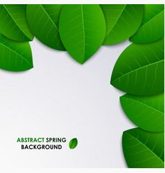 Abstract spring fresh background with green leaves vector
