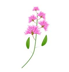 Bunch of pink crape myrtle flowers vector