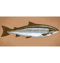 engraving trout retro vector image