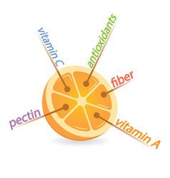 Orange content properties and benefits vector