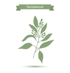 Sandalwood tree branch with flowers silhouette vector