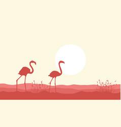 Silhouette of flamingo beauty landscape vector