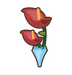 bouquet anthurium flower ornament image vector image