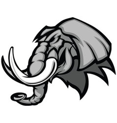 Elephant mascot head graphic vector