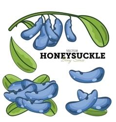 Honeysuckle set vector
