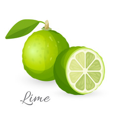lime exotic fruit whole and half green lemon vector image vector image