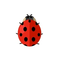 Insect ladybird isolated on white background vector