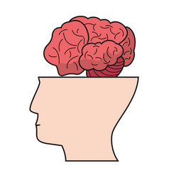 Head human brain creativity vector