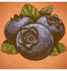 engraving blueberry retro vector image