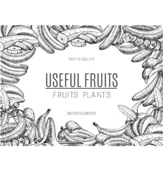 Design bananas of sketchesdetailed citrus vector