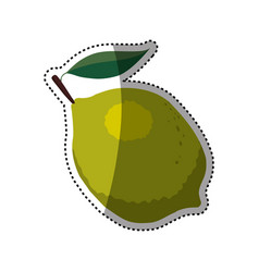 citric lemon fruit vector image