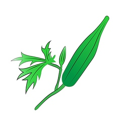Green okra vector