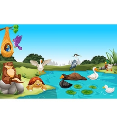 Many animals living by the pond vector image