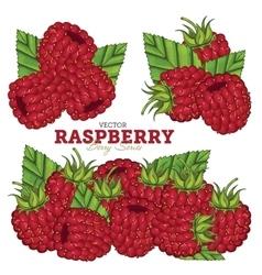 Raspberry Set vector image vector image