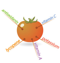 Tomato content properties and benefits vector