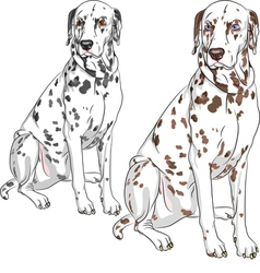 Serious dog dalmatian vector