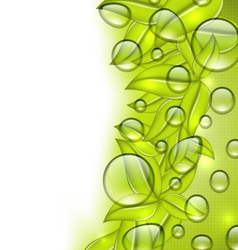 Water drops on fresh green leaves texture copy vector