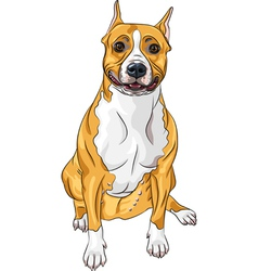 American staffordshire terrier vector