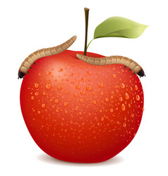 Red apple with two worms on it vector
