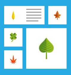 Flat icon leaves set of alder maple aspen and vector