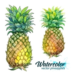 Watercolor painting fresh pineapples vector
