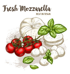 Realistic sketch of mozzarella vector