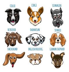 various dog head set vector image vector image