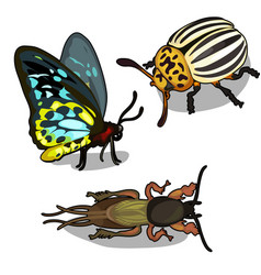 set of butterflies colorado beetle and cockroach vector image