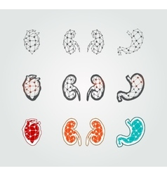 Stylized human organs icons vector image